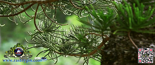 BBC: Как вырастить планету (2012)